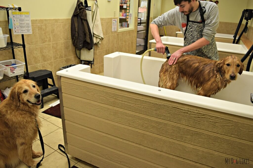 Giving the boys a bath at the self service dog grooming stations at PetSaver Superstore!
