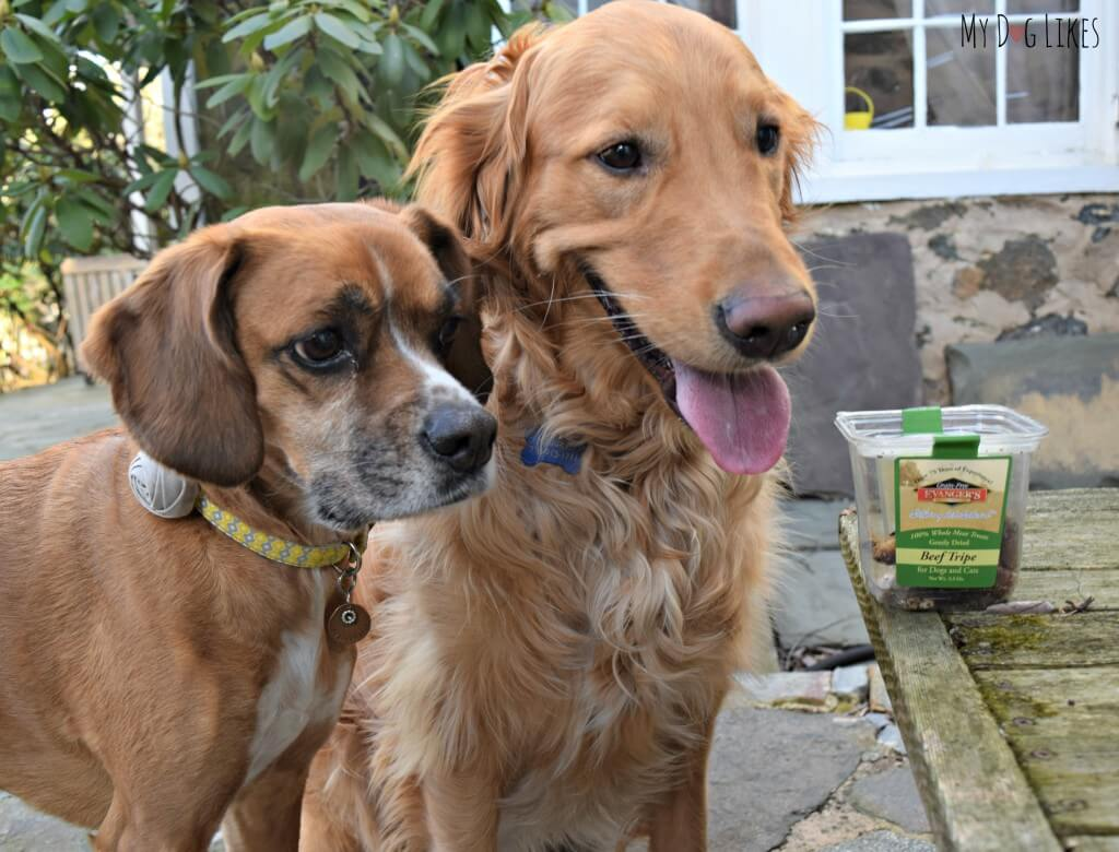 Charlie and Mia are always eager for the taste test portion of our dog treat reviews!