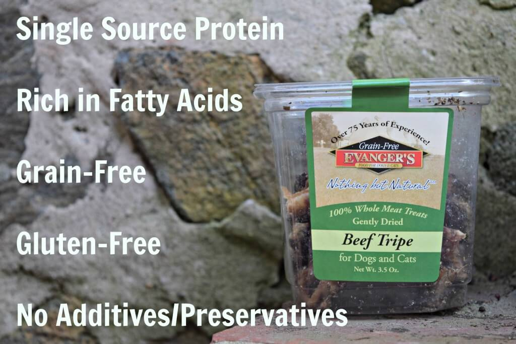 """Ever find yourself wondering, """"Is Tripe Good For Dogs?"""" Read our Evanger's Beef Tripe review to learn about all the health benefits!"""