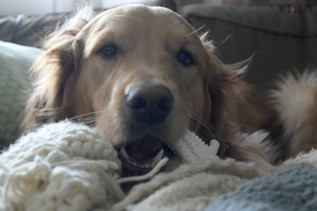 One of the best things about Nylabone's is that unlike regular bones, they are clean! You don't have to worry about stains or bacteria while chewing!