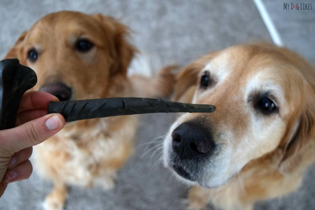 Harley and Charlie from MyDogLikes review Merrick's Texas Toothpicks! These dental chews are a great way to incorporate dog dental health into your daily routine!