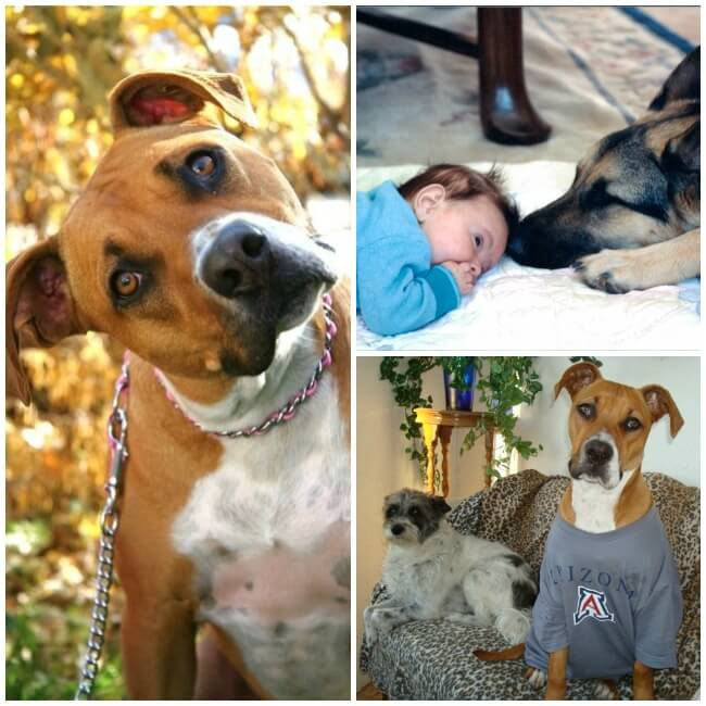 The Amato Pet Family - the inspiration for creating Amato Pet!