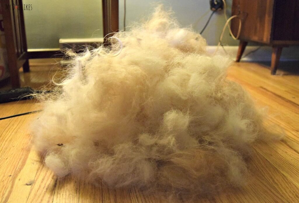 Dog Hair after a Grooming Session