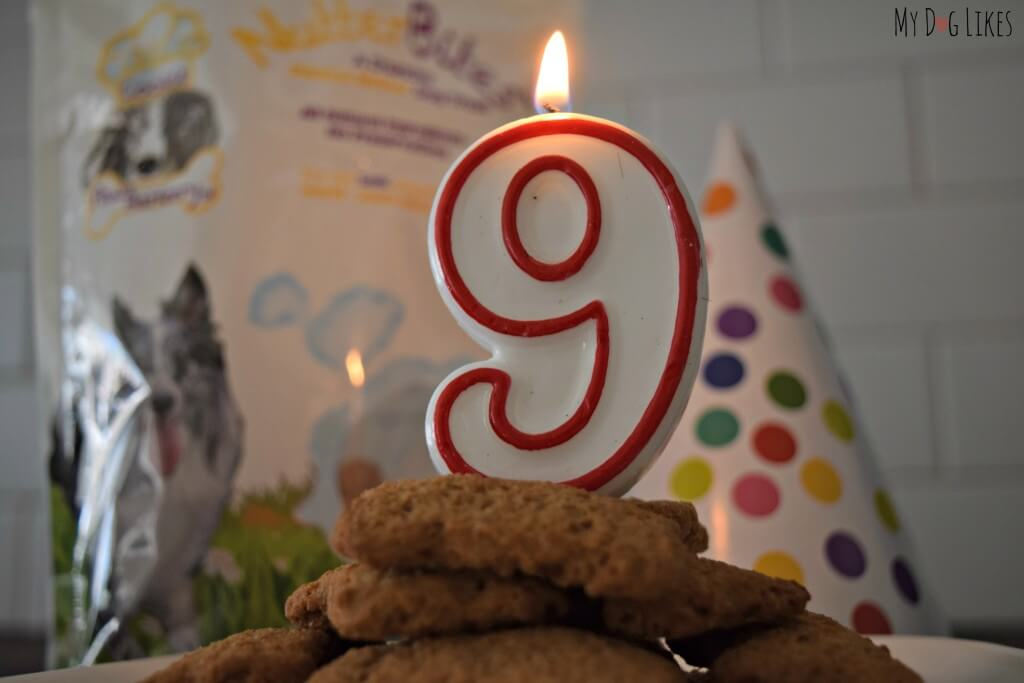 Our Dog Birthday Cake made of Paws Barkery biscuits!