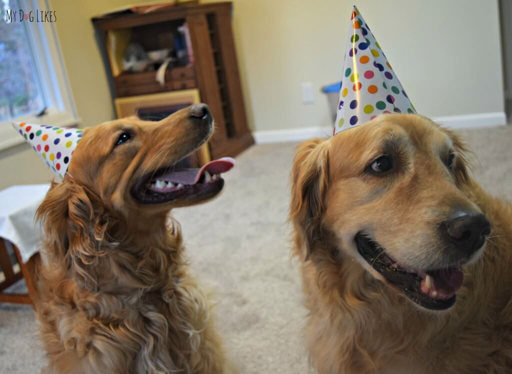 Dogs in party hats for the dog Birthday party!