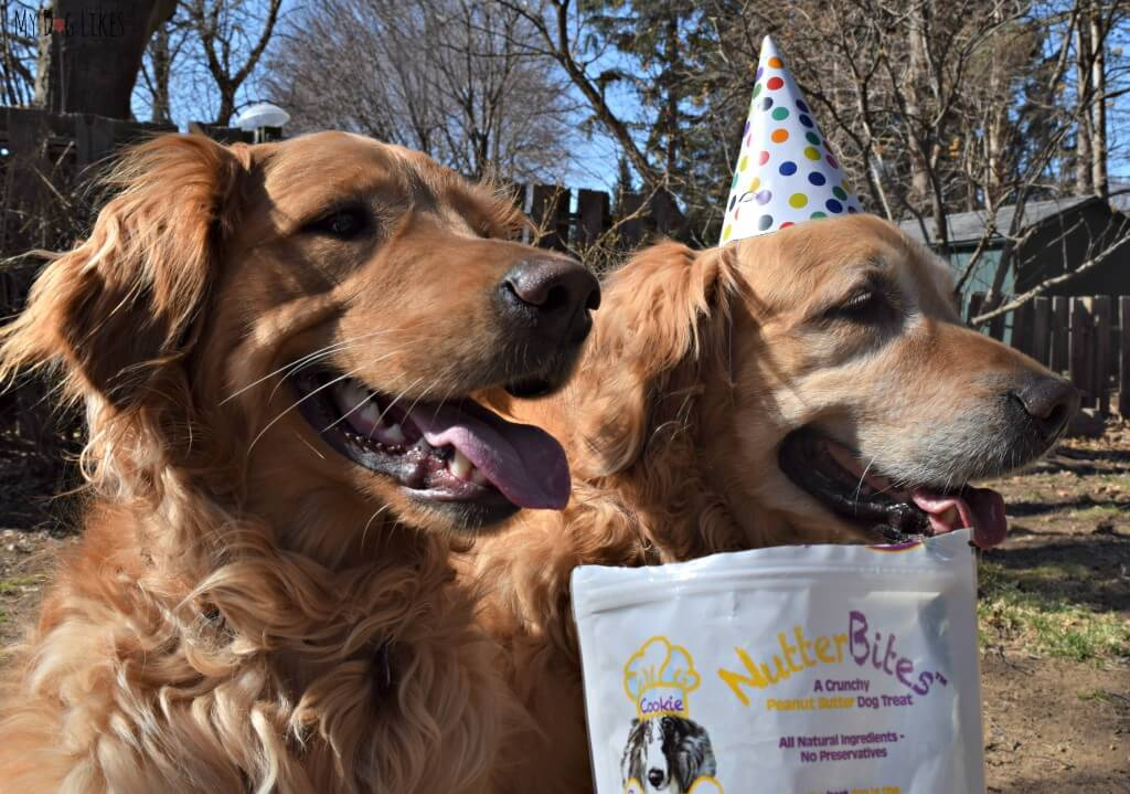 Harley and Charlie ready for a taste test in MyDogLikes official NutterBites Review!