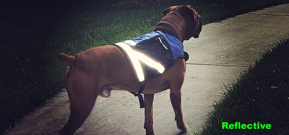 A reflective dog vest like those from PooBoss make walking in the dark or low light much safer