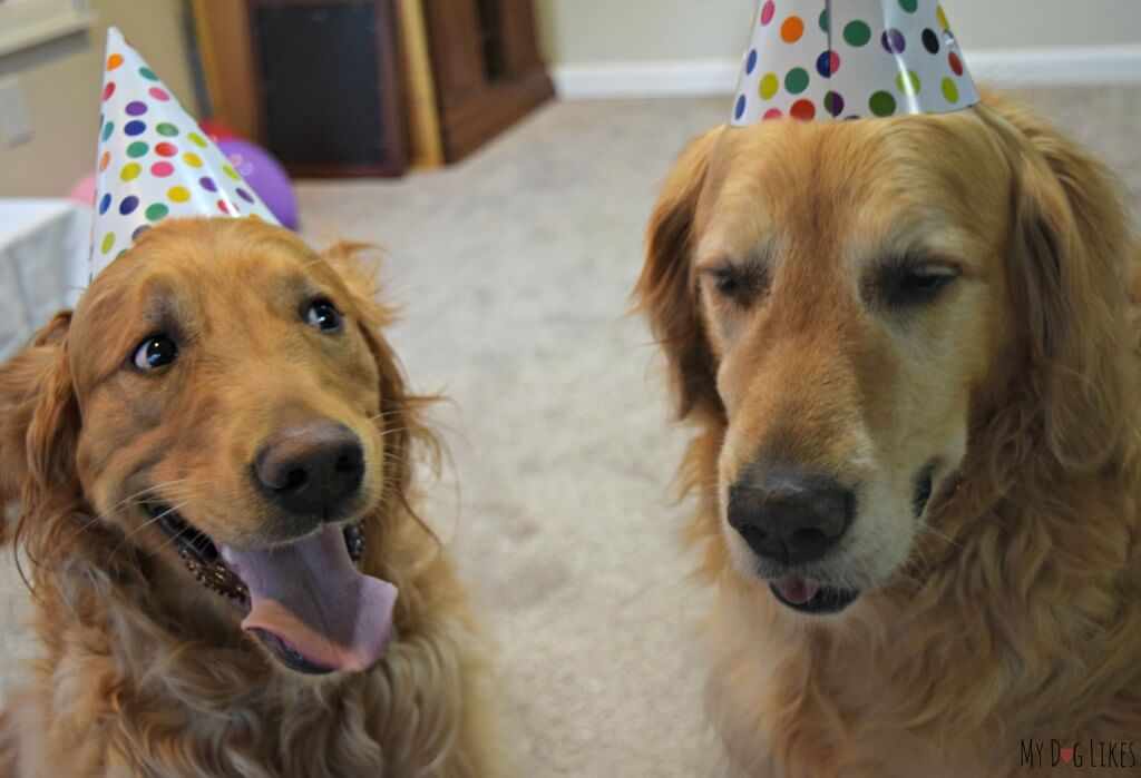 Our silly dogs having fun at the dog Birthday party.