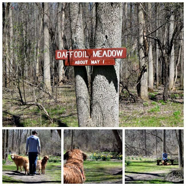 Hiking with dogs at Powder Mills Park