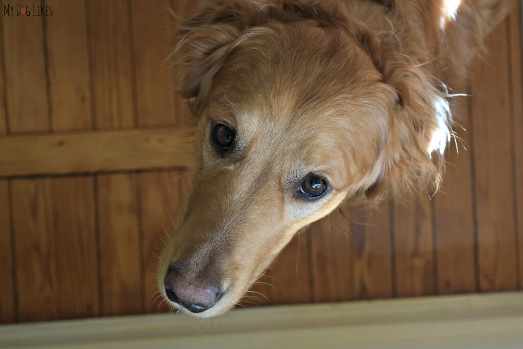Do you ever look into your dog's eyes and wonder what they are thinking?