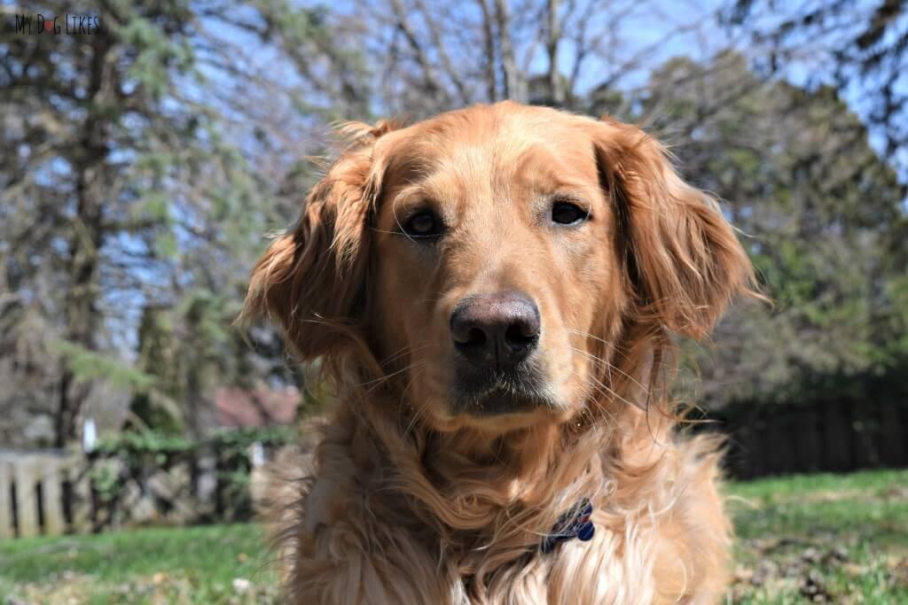 Our Handsome Dog Charlie