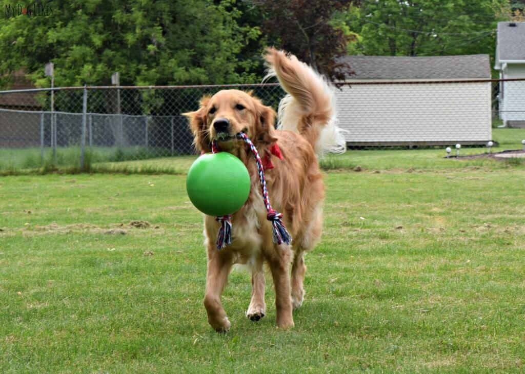 Carrying around the Tuggo tough dog toy