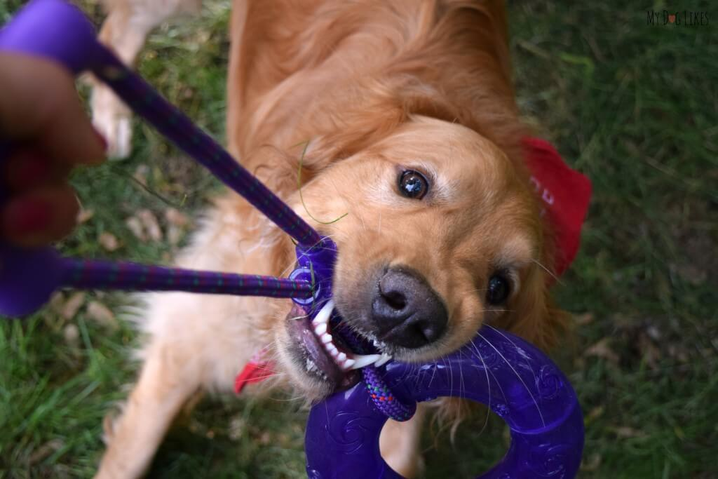 Searching for the best dog tug toys? Check out our KONG Squeezz Review!