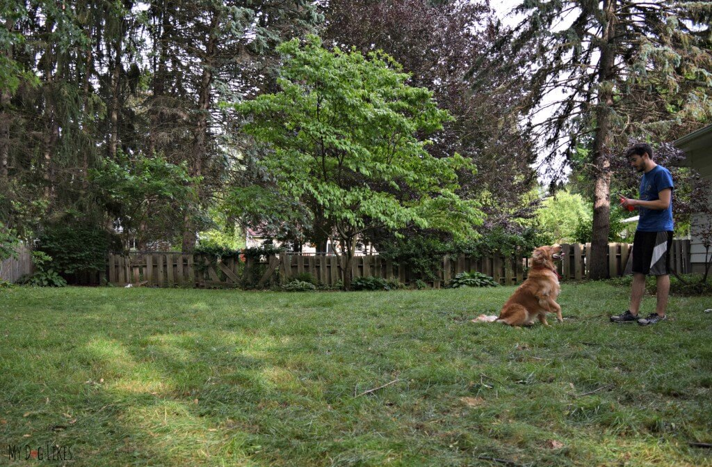 """Practicing the """"ready, steady, go"""" dog obedience command"""