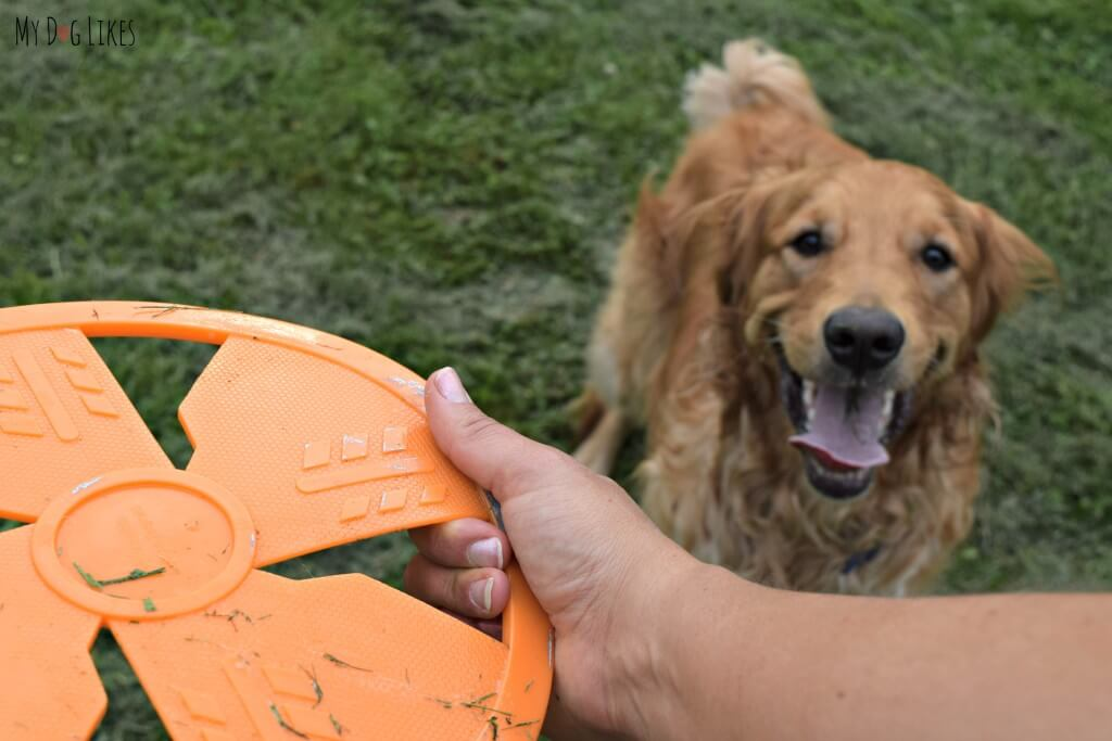 The slots in the NERF dog frisbee make it easy to grip and throw