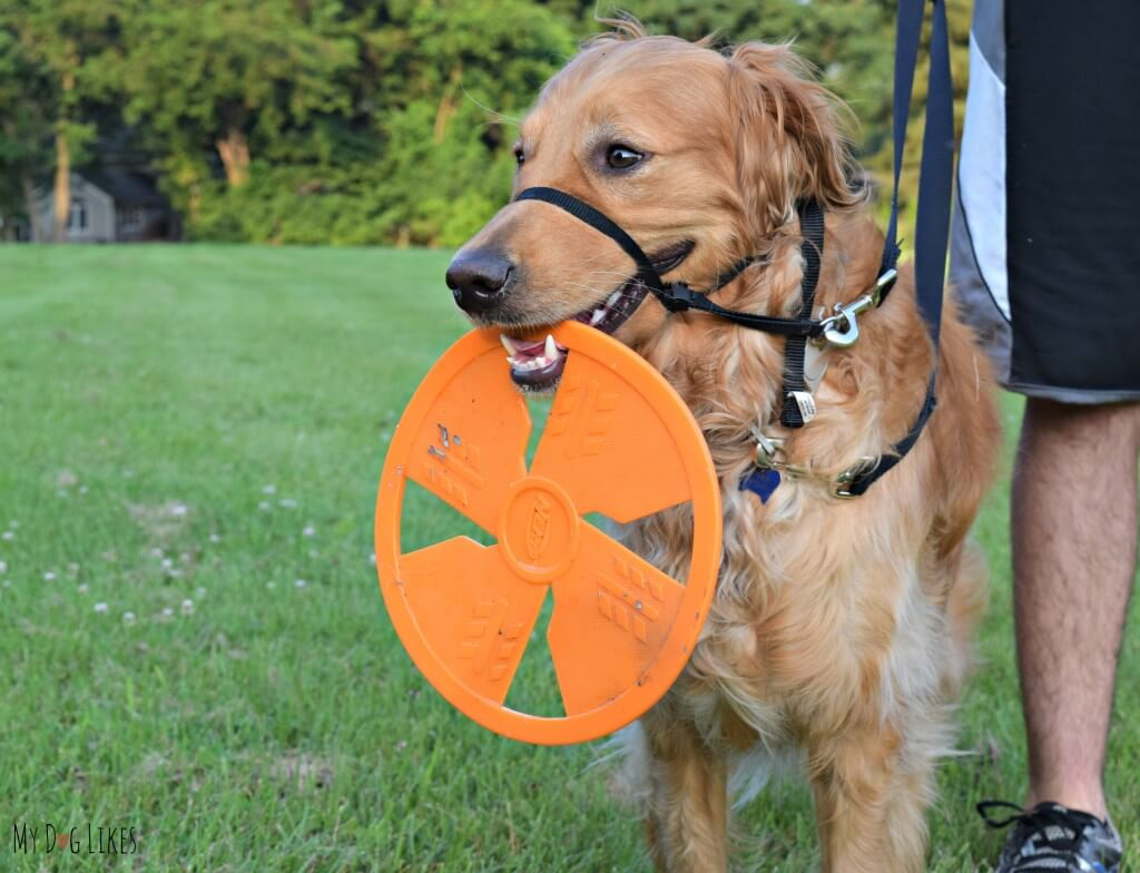 One of our favorite things about the NERF dog flyer is that it is easy for our dog to pick up and carry.