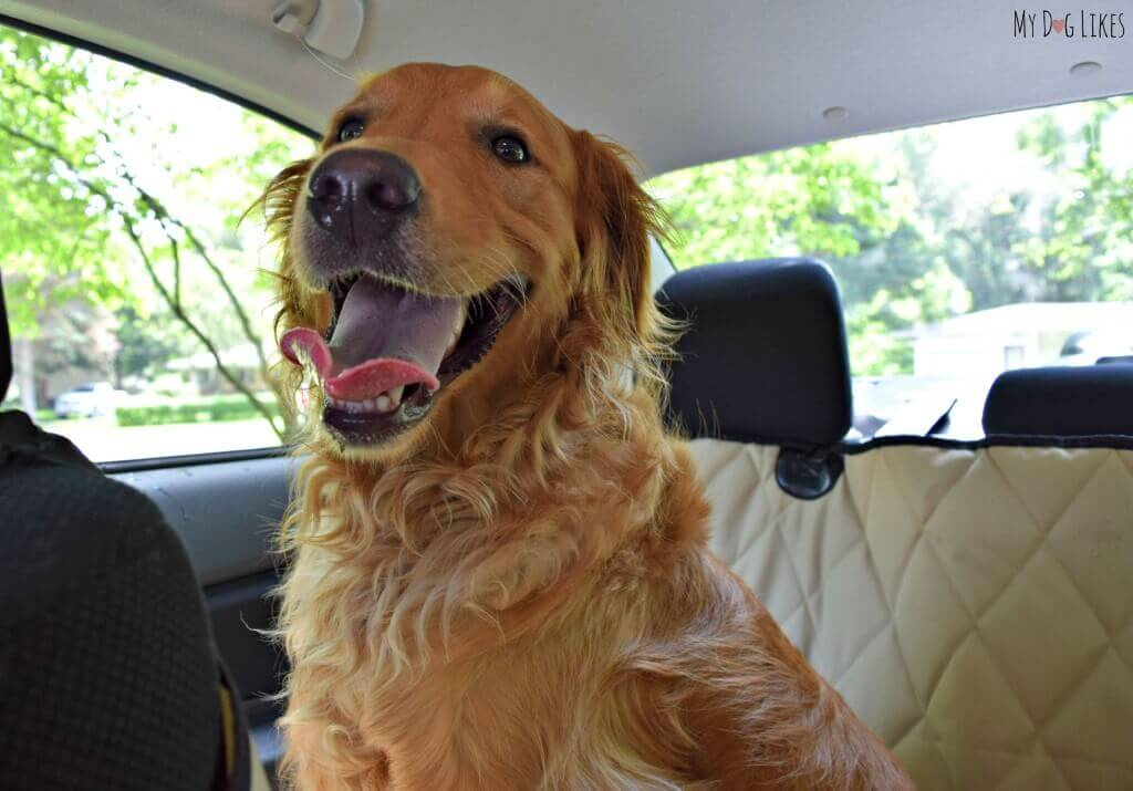 Charlie - Our Golden Retriever with a million dollar smile