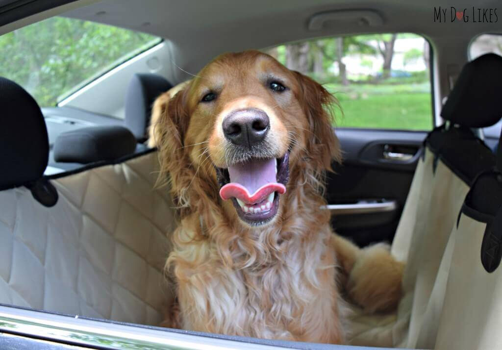 Traveling with dogs does not need to be difficult! Visit MyDogLikes for plenty of tips and helpful how-to's!
