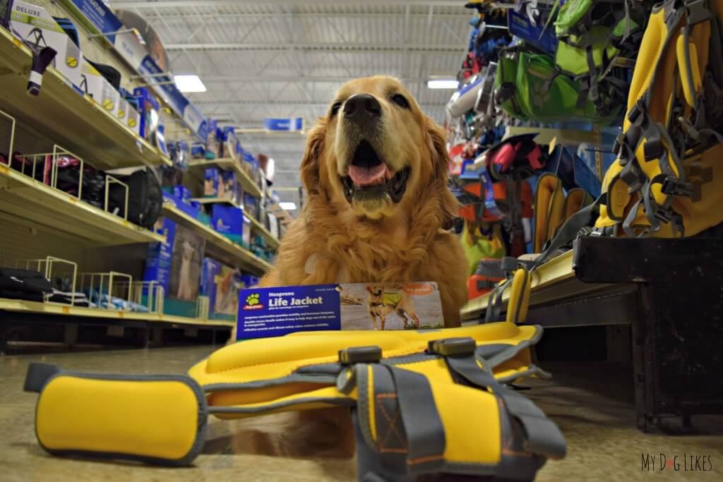 Shopping for a dog life jacket at PetSmart - We chose this large dog life vest from Top Paw