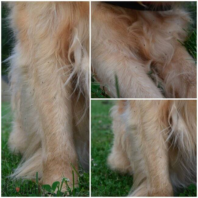 Are bugs bothering your dog while at the park or out for a walk? Consider trying out Dr. Harvey's Natural Bug Repellent for Dogs!