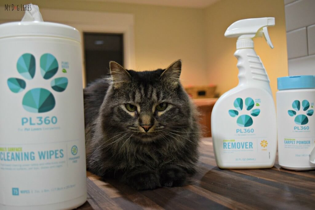 Max posing with the PL360 line of pet safe house cleaners