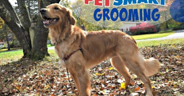 Check out Charlie's amazing PetSmart Grooming before and after photos in our PetSmart Grooming Review