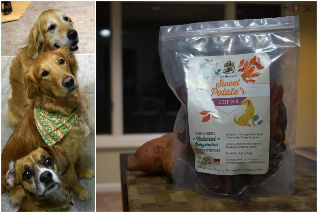 All the doggies waiting patiently for some Dehydrated Dog Treats from Dr. Harvey's!