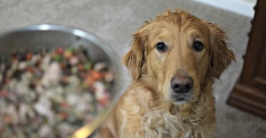 Dr. Harvey's makes it easy to make your own dog food!