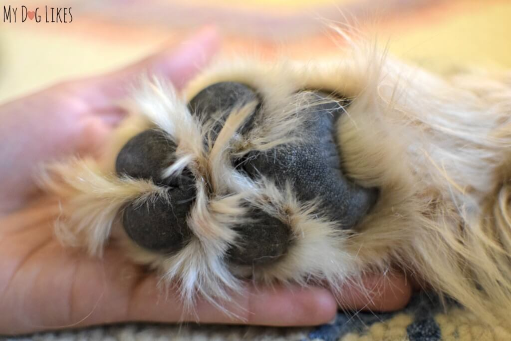 In need of some paw pad moisturizer!