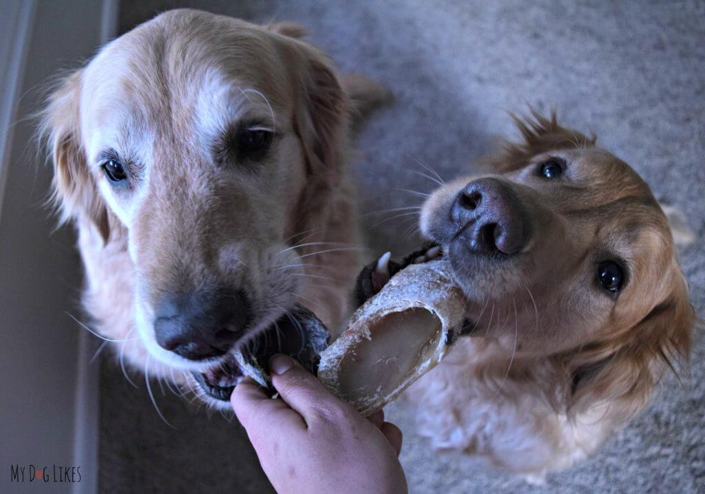 Cow hooves make for great long lasting dog chews