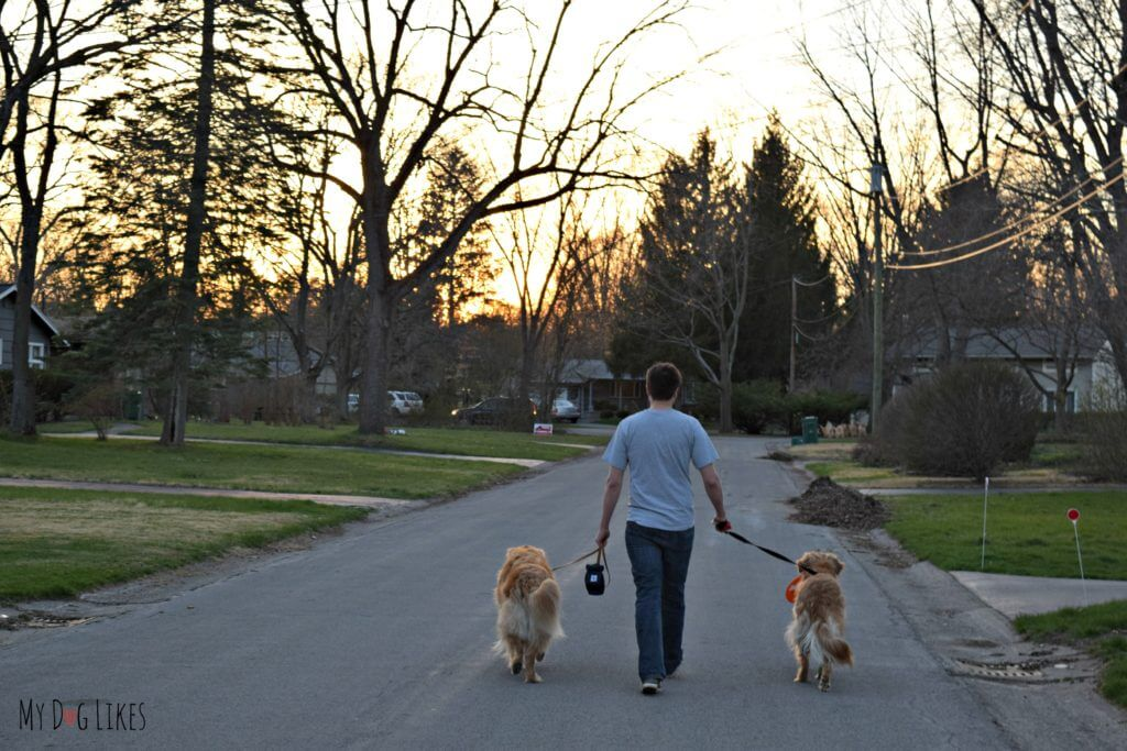 Walking with multiple dogs