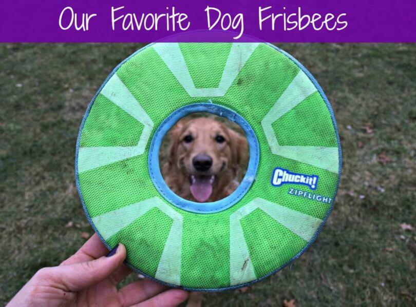 MyDogLikes breaks down the best frisbees for dogs