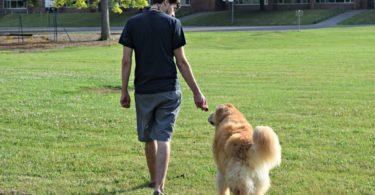 MyDogLikes breaks down our top 5 Tools to Train Loose Leash Walking