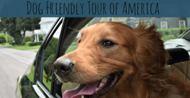 Follow along on the MyDogLikes 2016 Dog Friendly Tour of America