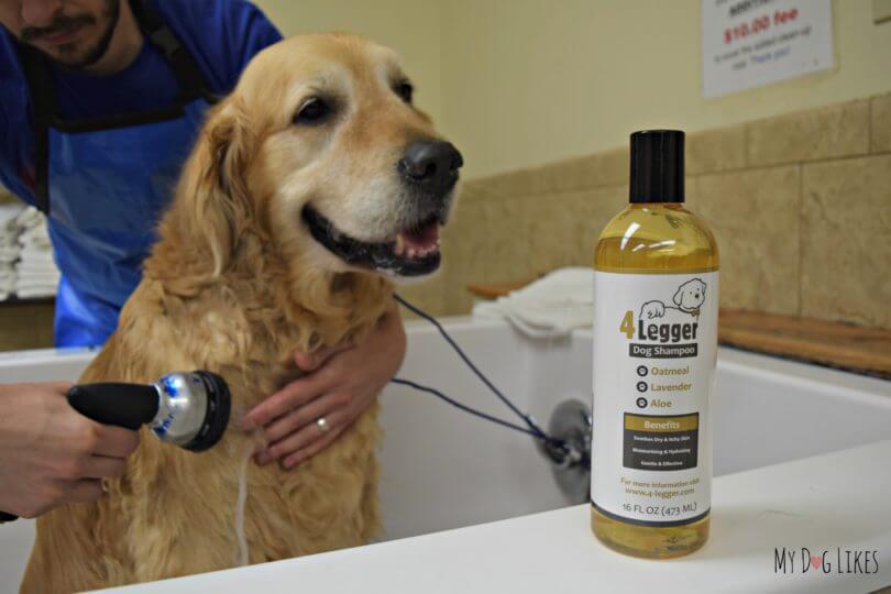 MyDogLikes reviews the new lavender scented shampoo from 4-Legger