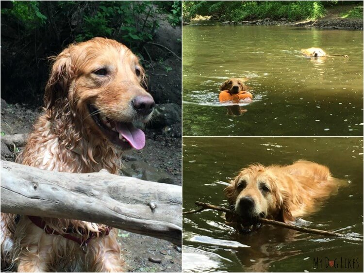 Dogs swimming at Corbett's Glen in Rochester, NY