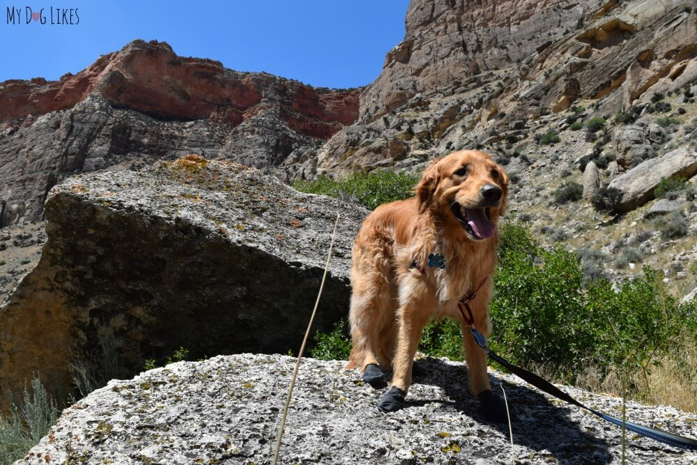 Hiking with our dog Charlie in Bighorn National Forest