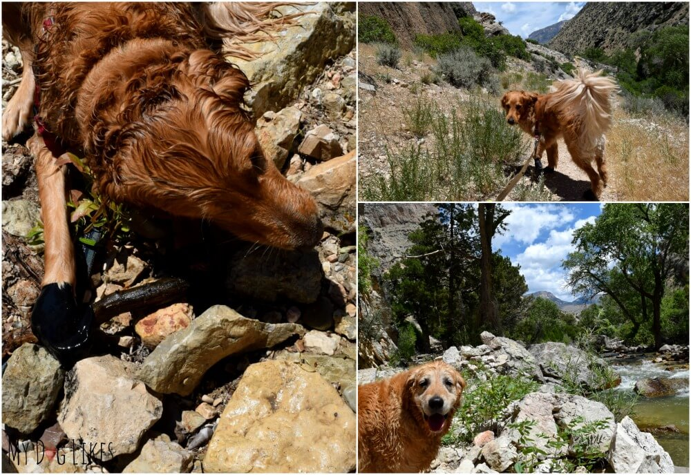 Hiking the Beef Trail along Shell Creek with dogs