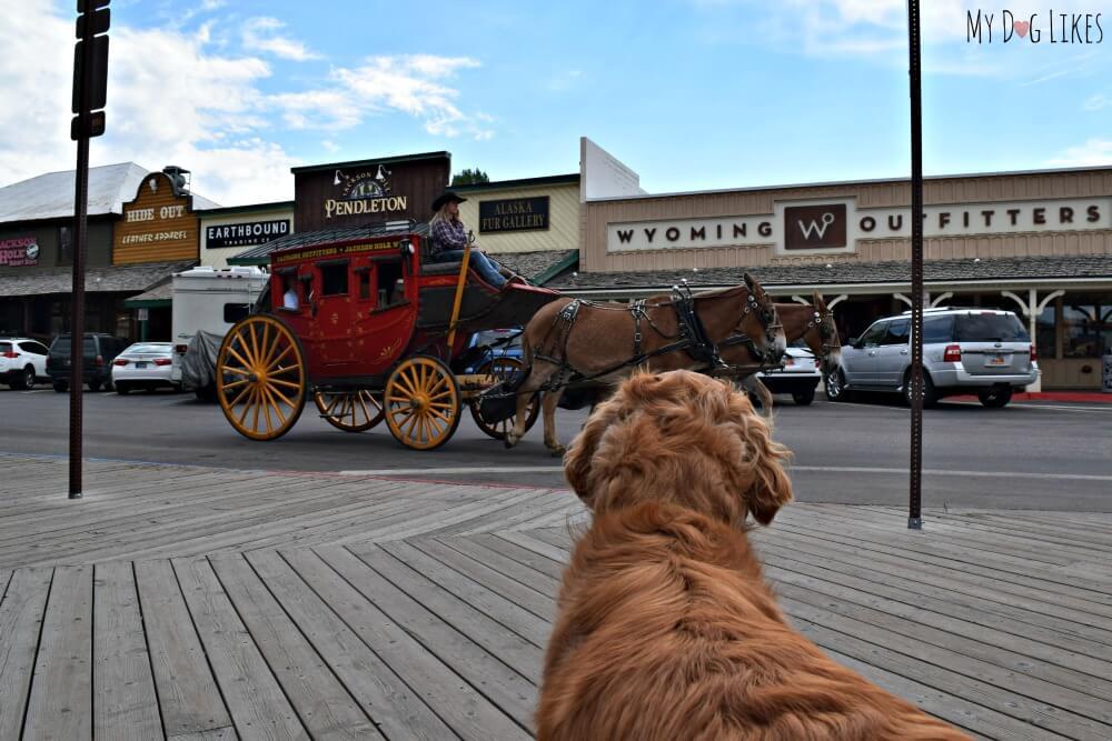 Exploring Jackson Hole, Wyoming with Dogs