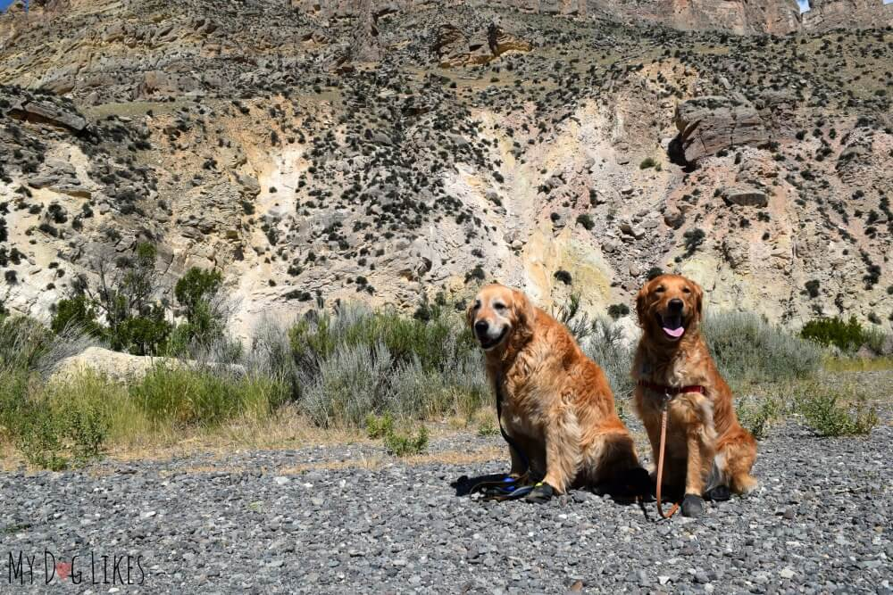 We rely heavily on Pawz dog boots to provide protection from heat and rough surfaces.
