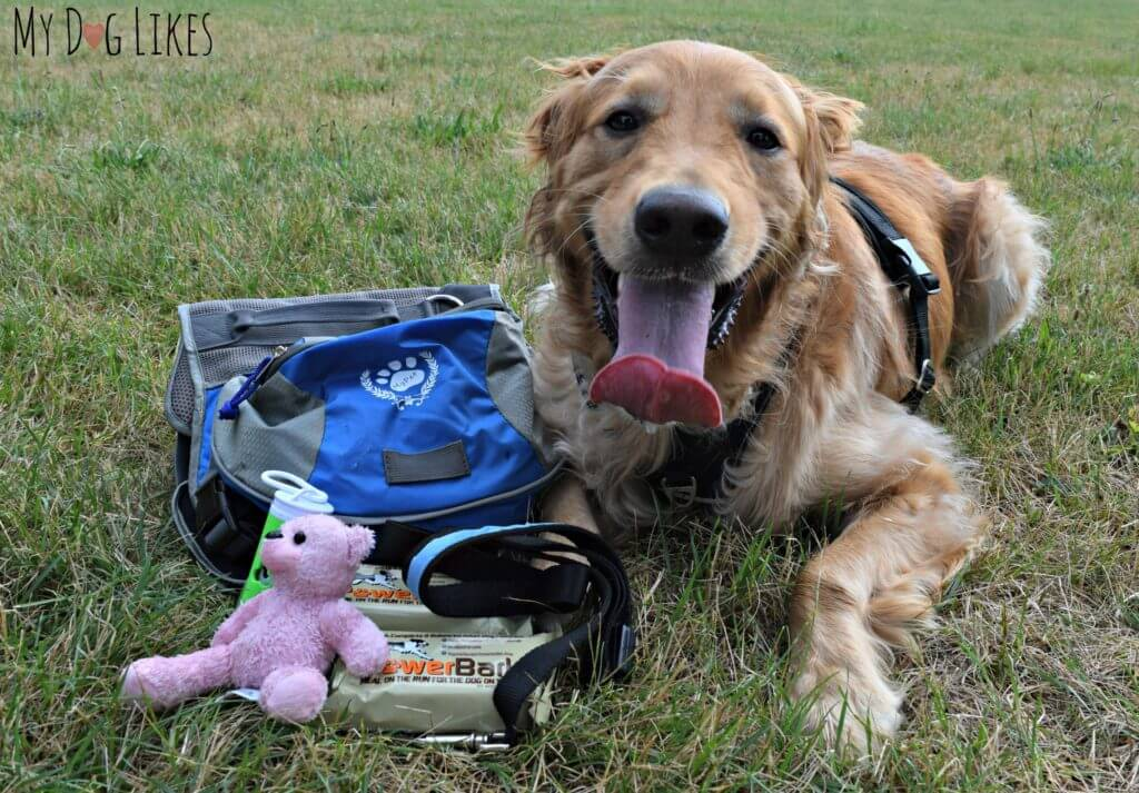 More pet emergency supplies that come loaded in the WhyWeWag bug out bag.