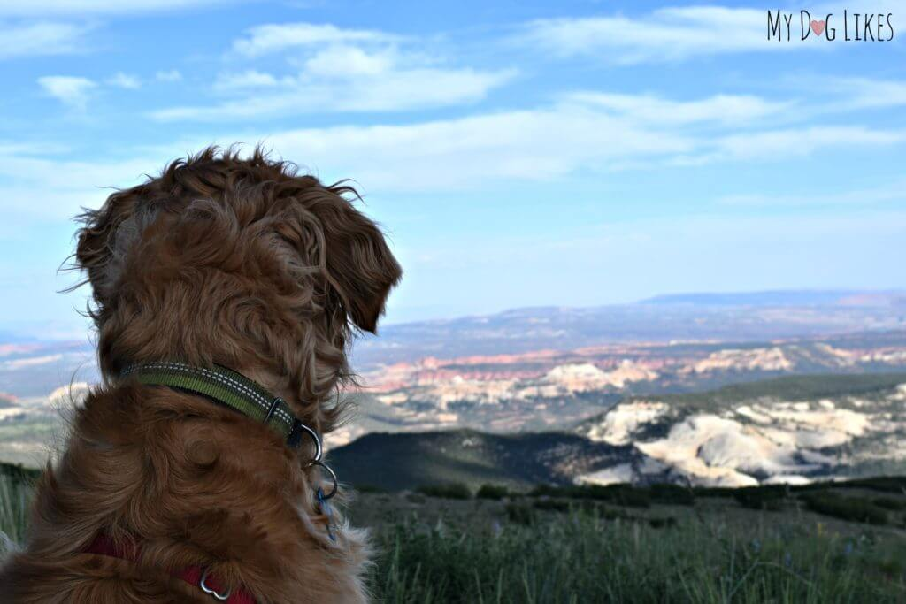 Our dog Charlie looking out over Grand Staircase