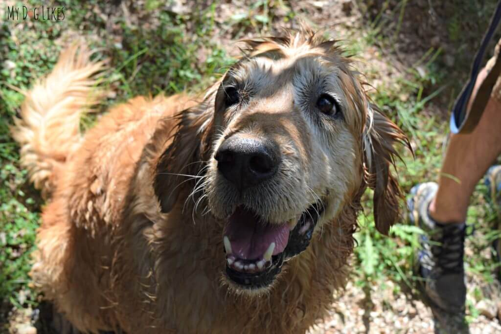 Harley is quite satisfied after taking a dip in the creek!