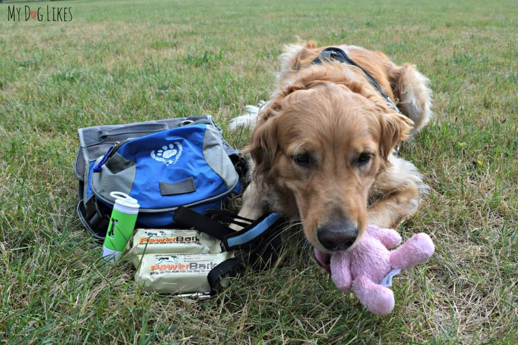 Charlie already enjoying the comfort toy from his emergency bug out bag!