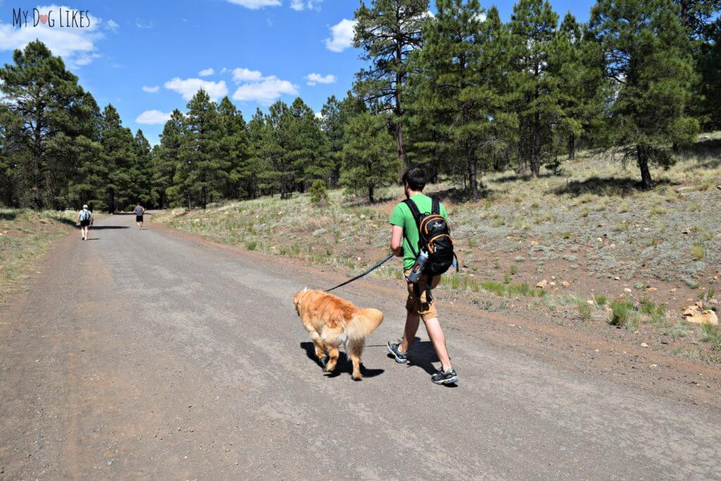 Hiking with dogs at Campbell Mesa near Flagstaff, Arizona