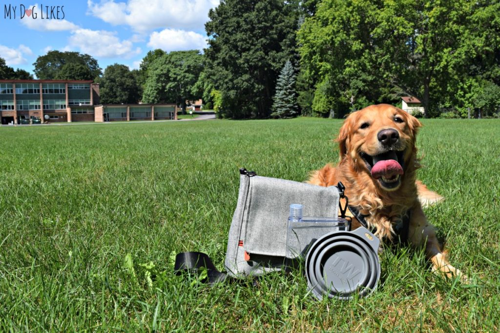 The Travel Wags bag was designed specifically for pet parents.