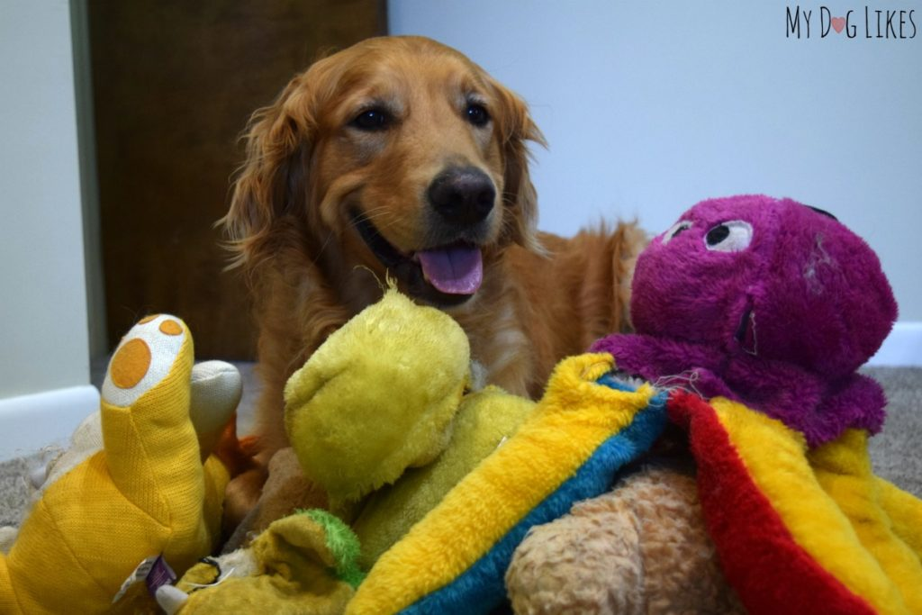 Happy to see toys that had been sent to the dog toy graveyard!