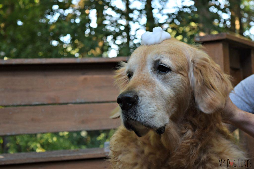 foam-dog-shampoo
