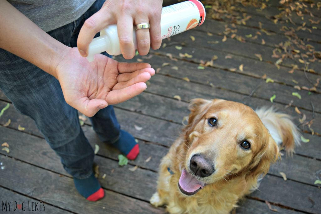 water-less-dog-shampoo-review
