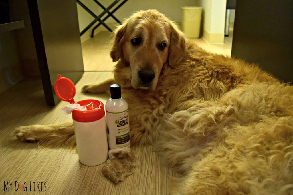 Learn how to make dog grooming wipes in our step by step guide! Check out the before and after to see how well they work!